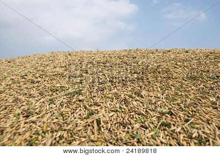Rich Harvest.