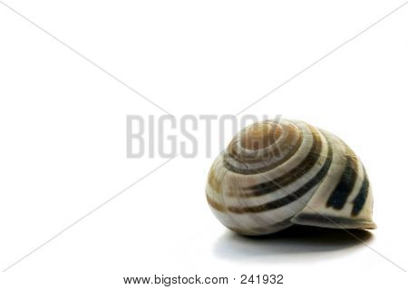 Seashell On White