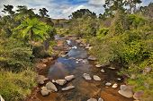 creek and fern trees in tropical tablelands Queensland Australia unspoilt pristine and pure wilderne