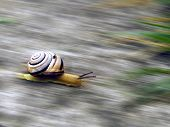 Snail On To Go