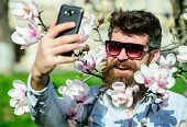 Vlogging Concept. Man With Beard And Mustache Wears Sunglasses On Sunny Day, Magnolia Flowers On Bac poster