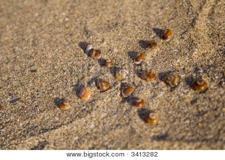 Sea Shells In Star