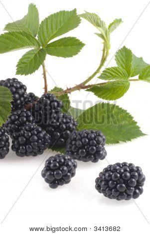 Wonderful Blackberries.