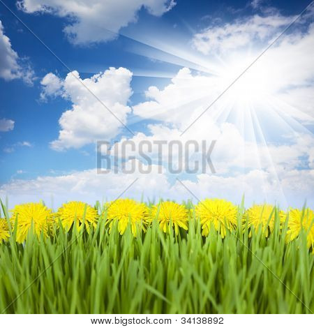Yellow Dandelions, Green Grass and Blue Sky with Sun / beautiful picture