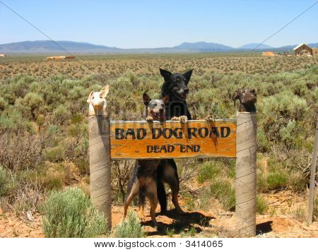 Annie And Crowley Bad Dog Road
