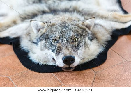 Wolf Skin On The Floor