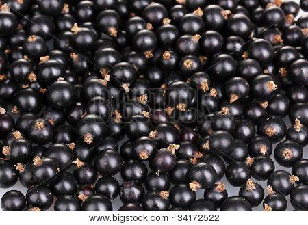 Black currant close-up