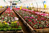 Blurred Interior Of An Industrial Floriculture Greenhouse With Flower Beds In The Foreground poster
