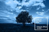 Classic Blue Main Color Trend Of The Year 2020. Summer Landscape With A Lonely Tree In A Field With  poster