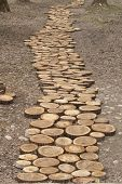 Path From The Cuts Of Tree Trunks. Walkway In The Park Made Of Round Saw Cuts Of Tree Trunks. Outdoo poster
