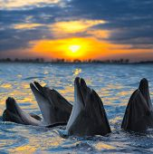 foto of dolphins  - The bottle - JPG