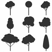 Silhouettes Of Trees. Black Isolated Silhouettes Of Trees On A White Background. Black Silhouette Of poster