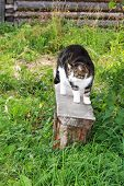 Beautiful Colorful Cat With Green Color Eyes Arched Its Back On A Banch Rural Scene. . Close Up. Nat poster