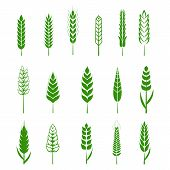 Set Of Simple Wheats Ears Green Icons And Grain Design Elements For Beer, Organic Wheats Local Farm  poster