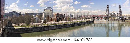 Cherry Blossom Along Portland Oregon Waterfront Panorama