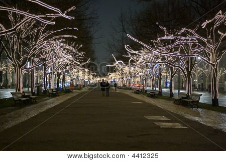 Roadside Trees Decorated With Lights
