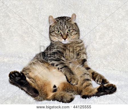 Cat Sitting On A Sofa