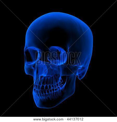 Xray Of Human Skull / Head