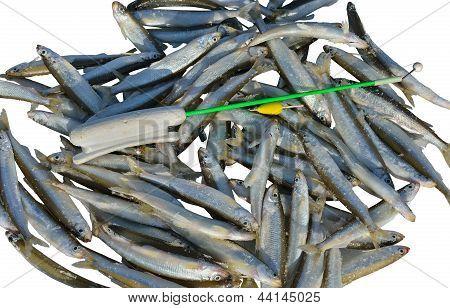 Catch On Winter Fishing