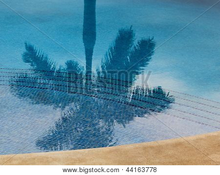 Reflection of palm tree in swimming pool