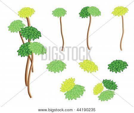 A Set Of Isometric Yucca Tree And Dracaena Plant