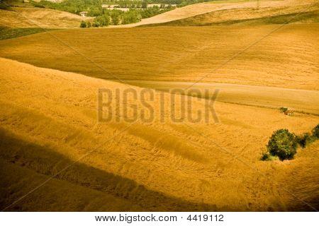 Tuscany Hills In Yellow