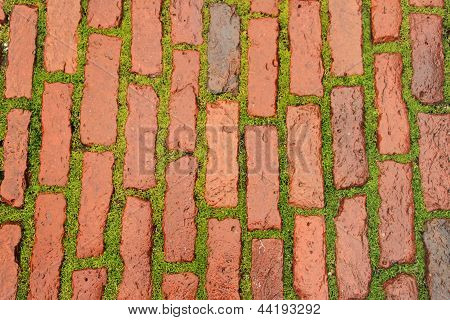 brick roadway with young herb