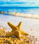 pic of starlet  - Sea Starlet Five Beams - JPG