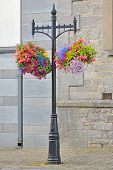 picture of lobelia  - Hanging Flower Basket  shoot in summer time - JPG