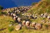 Mountain landscape with a herd of sheep