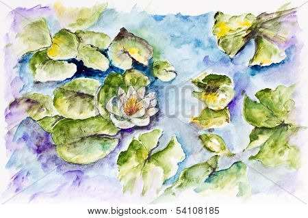 White Water Lily In Small Pond