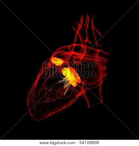 3d render Heart valve - back view