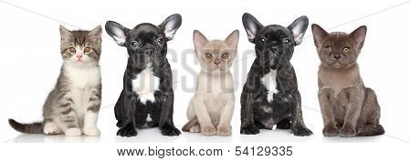 Group Of Puppies And Kittens