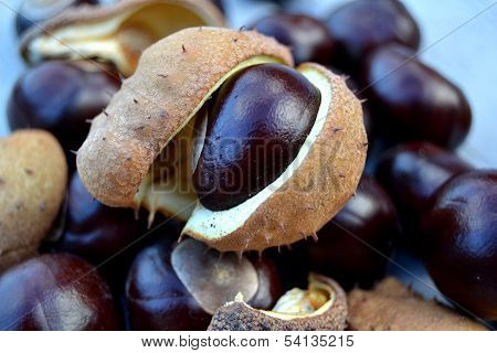 Pile of Conkers
