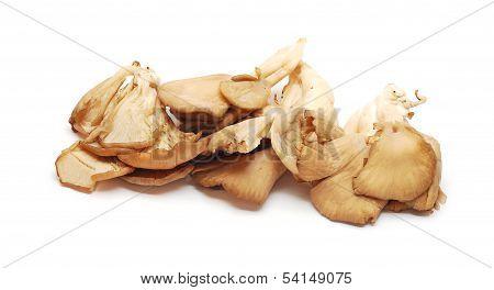 Pleurotus Mushrooms