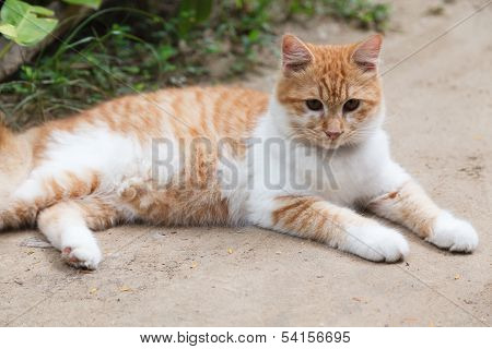 Cute Brown Cat On The Floor
