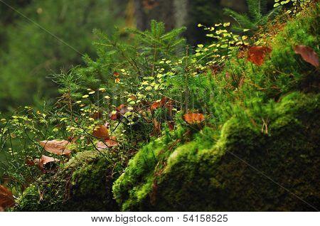 Detail Moss