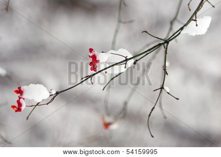 Branch with red flower in snow