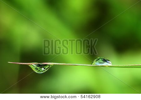 two Water drops in a green plant macro