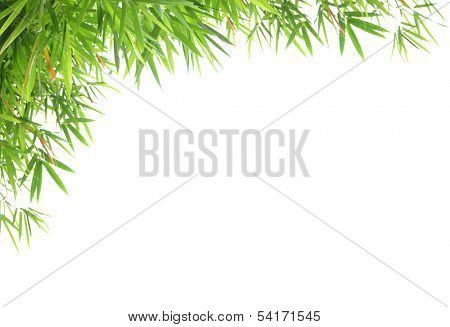 bamboo leaves isolated on white background with sample text for design