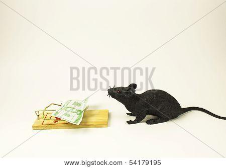 Greedy Rat 2