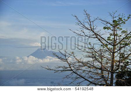 Kapok Tree & Active Volcano Background