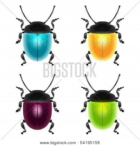 Beetles Set