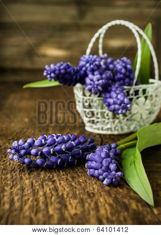 Murine Hyacinth In Basket