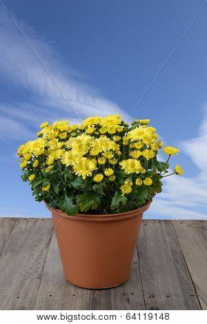 Flower In Jardiniere.
