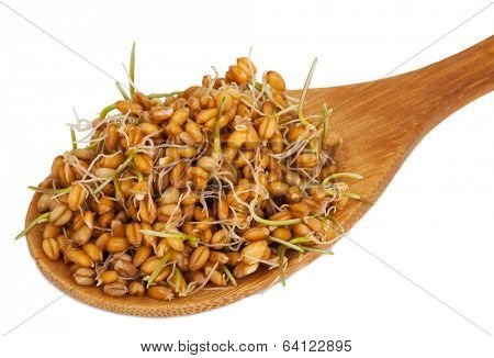 Wheat germ in a wooden spoon