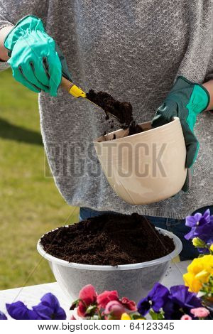 Woman Hands Replanting Flowers