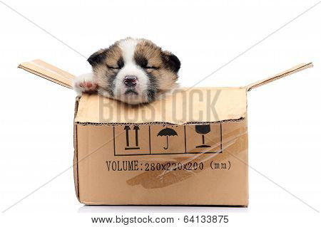 Puppy in the box