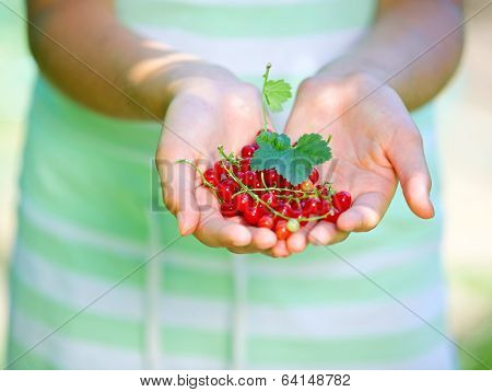 Hands with redcurrant.