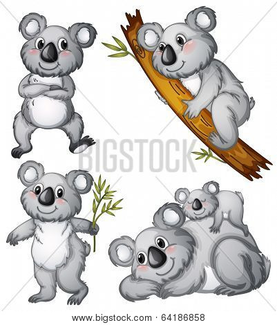 Illustration of a group of koalas on a white background